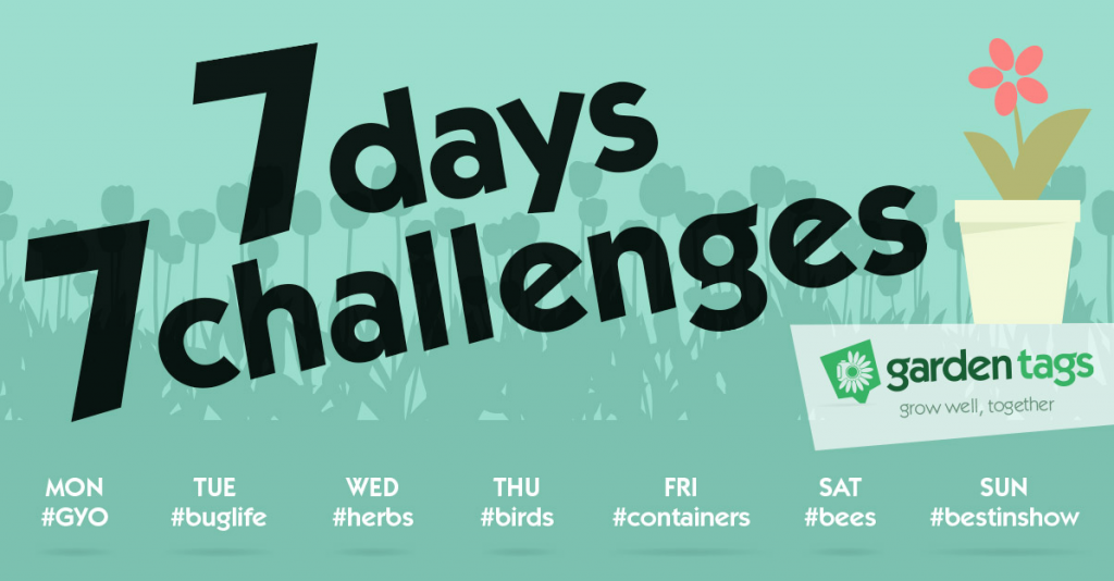 7 days 7 challenges – let's see those photos!