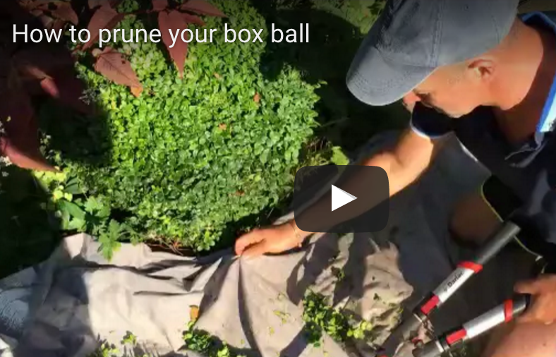 How to prune your box ball