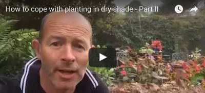 Part II – How to cope with planting in dry shade
