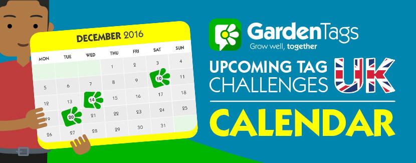 AUS Calendar: February Tag Challenges