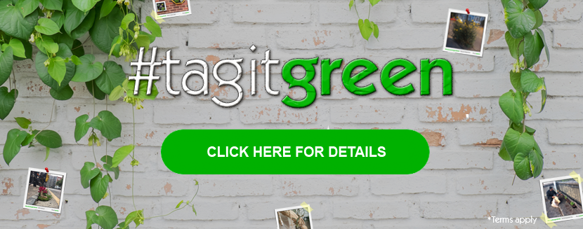 #tagitgreen – help us green up our wall