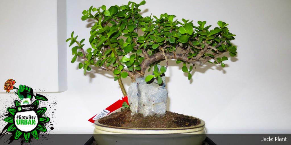 Urban Gardening Adventures - Kyle Leonard - Experimenting with Bonsai