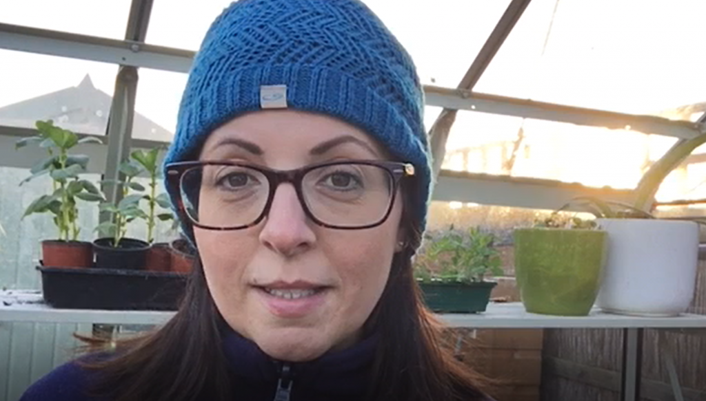 How to use manure and organic matter on your garden and allotment