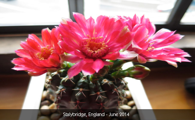 Urban Gardening Adventures - Kyle Leonard - Cacti - June 2014