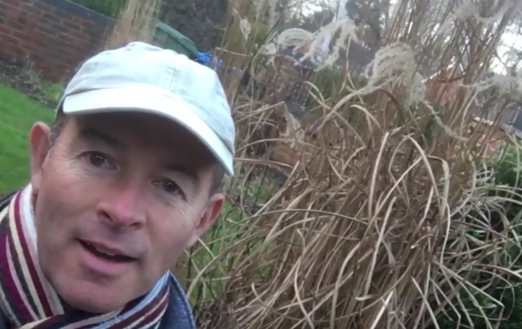How to cut back deciduous grasses – video guide