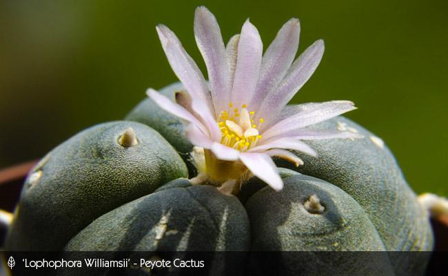 Urban Gardening Adventures - Kyle Leonard - Cacti Garden
