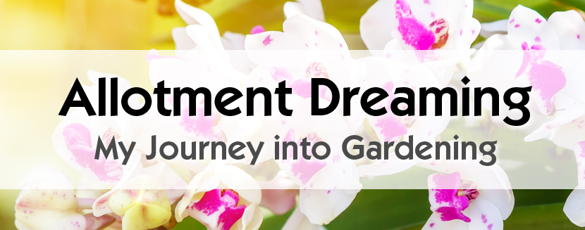 Natalia Bogucka. Polish Gardener - Guest Blog. Allotment Dreaming - My Journey into Gardening
