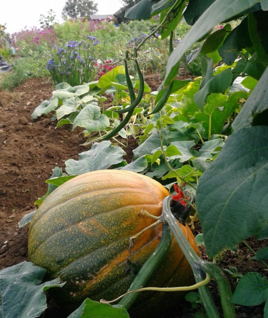 Top ten veg pumpkin