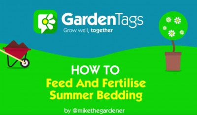How to feed and fertilise summer bedding