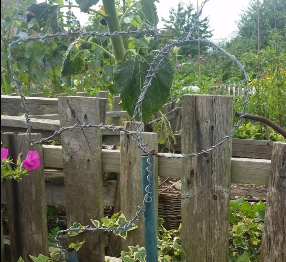 How to make a living veg plot sign