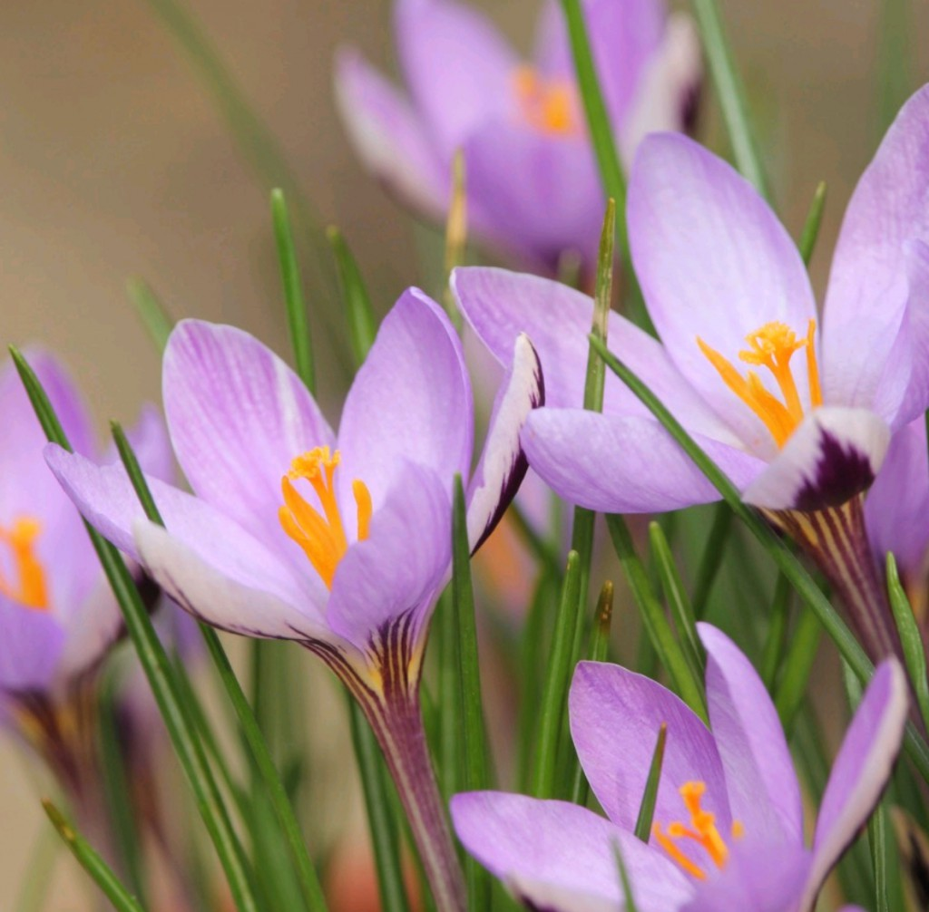 10 step guide to layering spring bulbs in containers