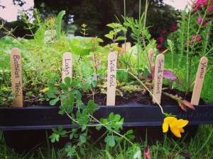 Plug plant tray