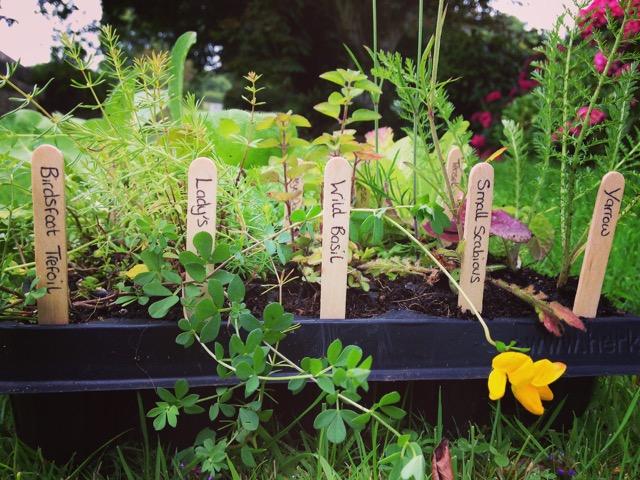 5 Simple Steps to Make a Wildflower Garden