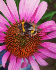 Wildlife garden bee