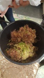 Pre soak the Sphagnum moss