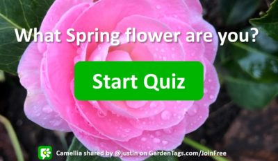 What Spring Flower Are You?