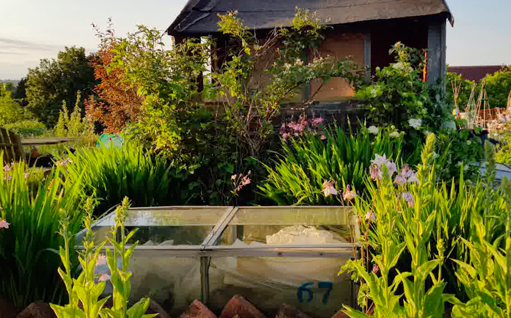 What is cold frame gardening