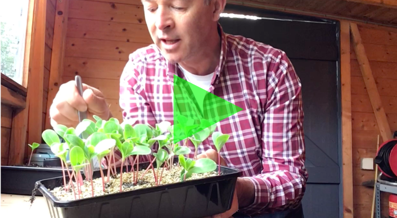 How to prick out and pot on – GardenTags 'how to' series